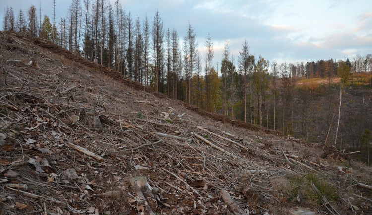 Plzeňský kraj eviduje téměř 500 tisíc metrů krychlových kůrovcového dříví